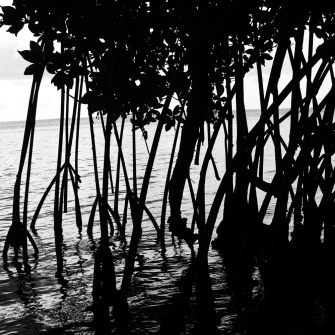 Lorusso-red-mangrove-print-pic-sq-sm